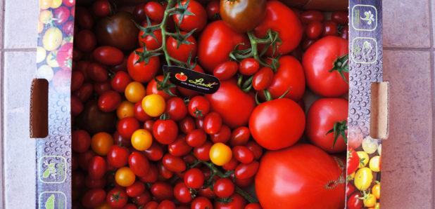 Luštov paradižnik